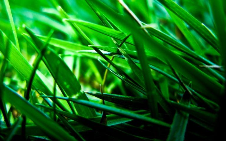 plant 2 - apalit